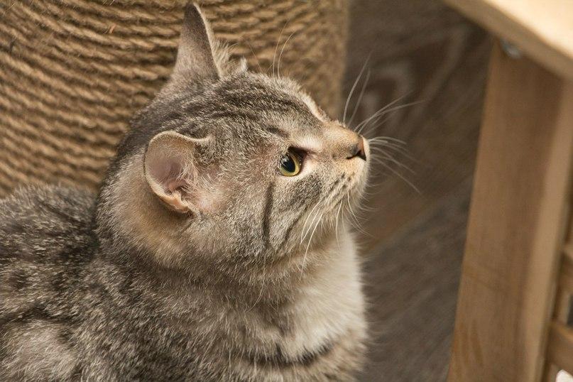 Photo from www.kotocafe.ru